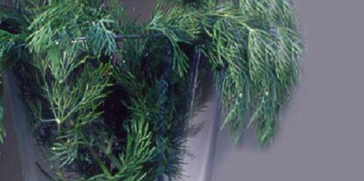 Les atouts santé des plantes aromatiques
