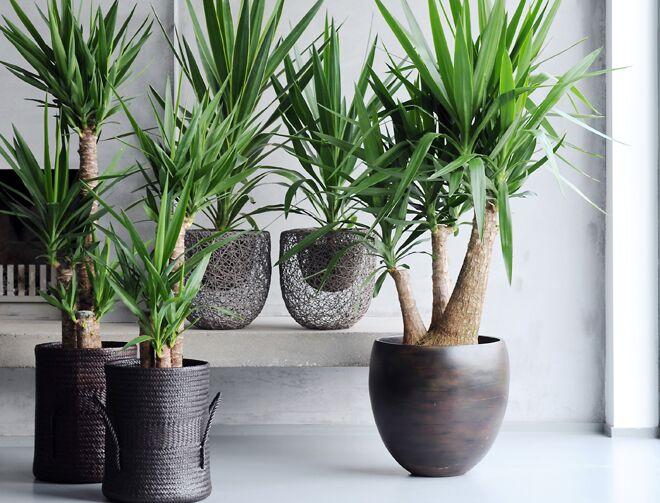 Quelle Plante Verte Pour Quelle Piece De Votre Interieur