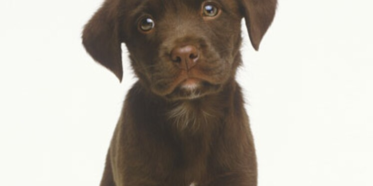 Noms de chiens : 2010, l'année du F