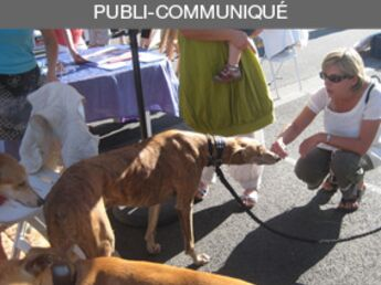 Les associations coup de coeur d'Animalis