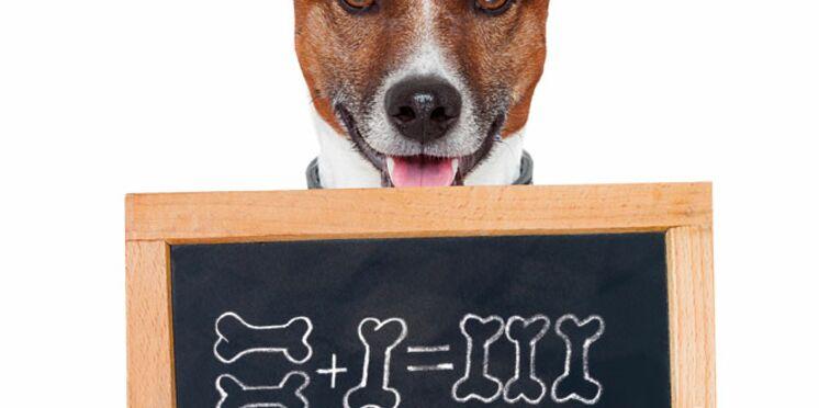 Animalis : Nos bons plans pour la rentrée - Publi-communiqués