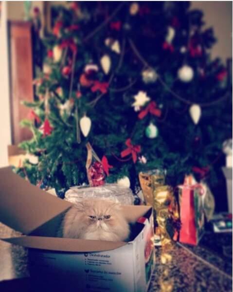 """Le """"grumpy cat"""" de Noël"""