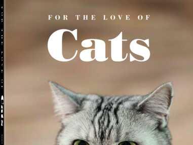 Un livre de photos chats trop mignons qui va vous faire fondre