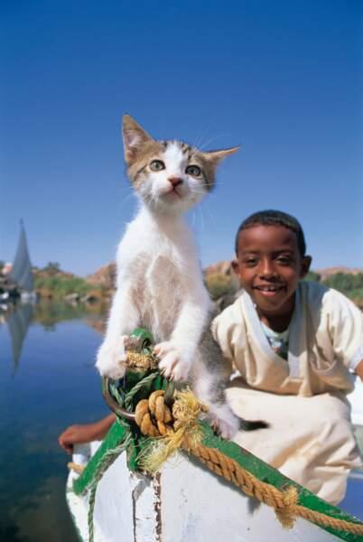 Chat en Egypte capitaine mon capitaine