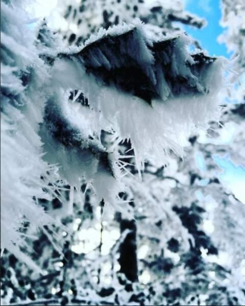 Le houx est littéralement congelé à Saint-Dié, dans les Vosges