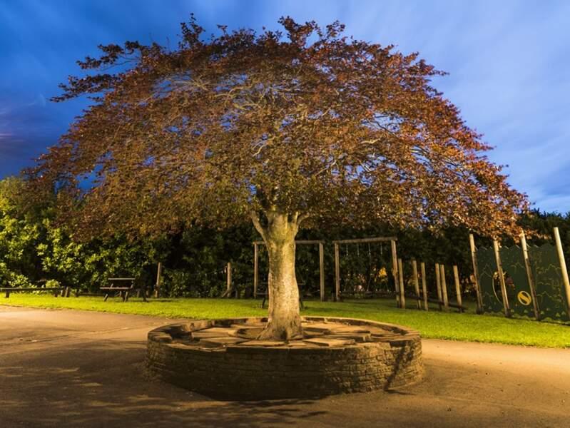 Ecosse : l'arbre « ding dong », qui fait le bonheur des élèves dans la cour d'une école