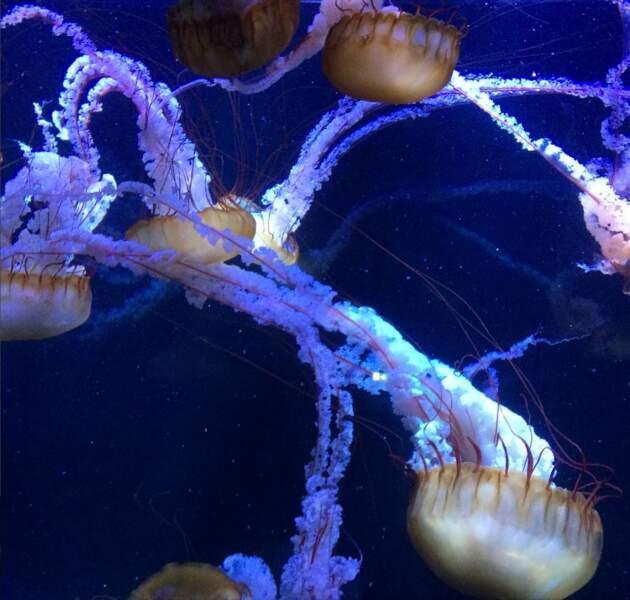 A Nausicaà, le grand plongeon