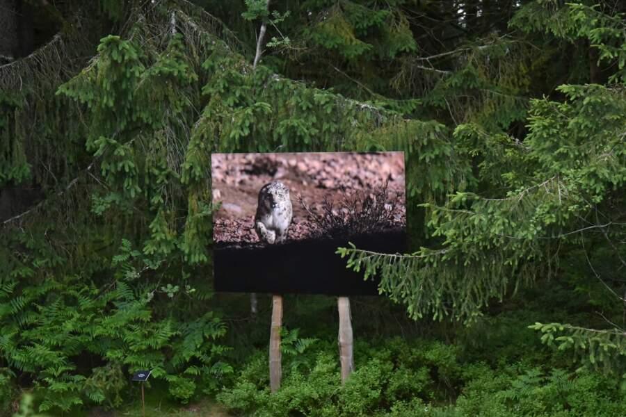 Balade photographique sur le toit des Vosges