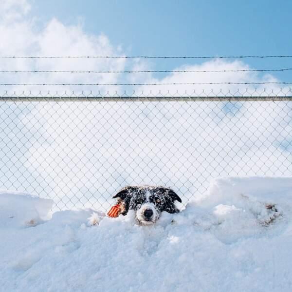 Momo à la neige