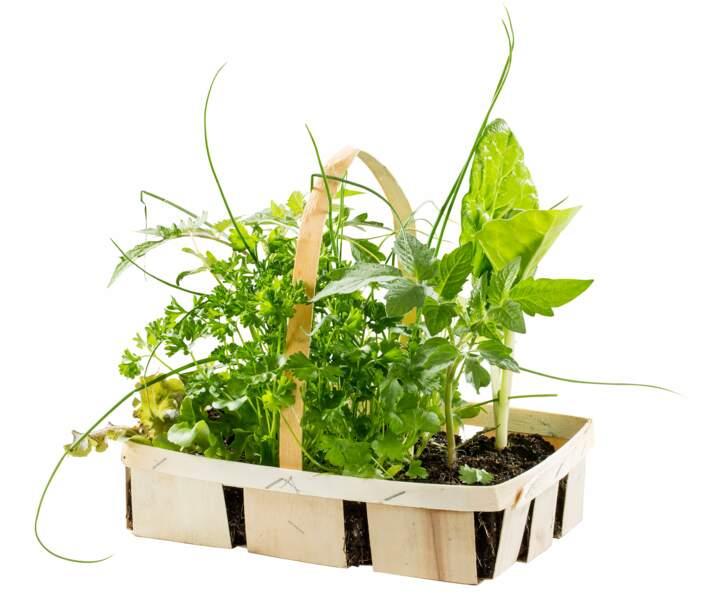 Plants biologiques Botanic