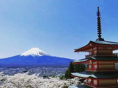 Magiques floraisons de cerisiers du Japon !