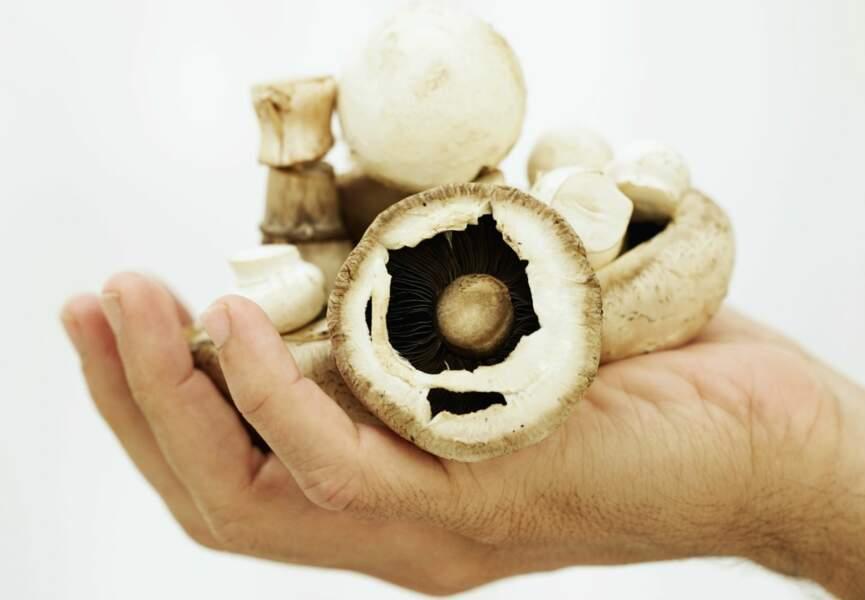 Le régime champignon