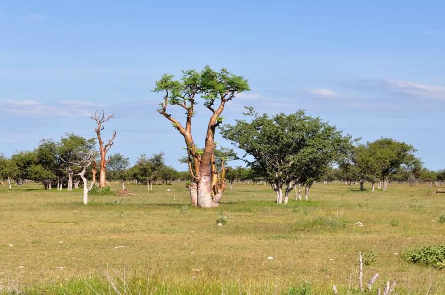 En Afrique : des plantes pour être bien dans sa peau