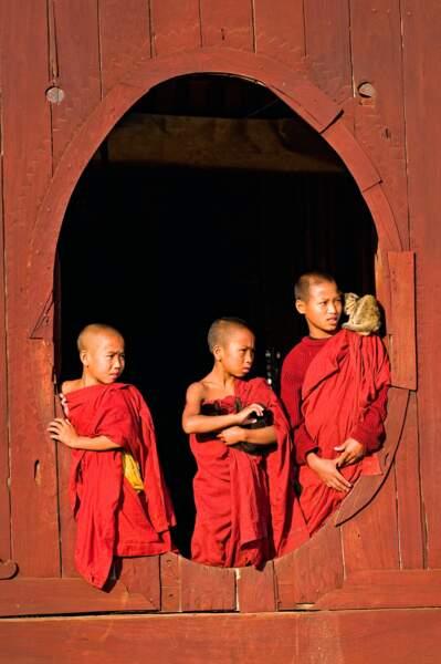 Chat en Birmanie entre de bonnes mains