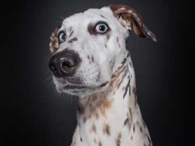 Ces chiens font de sacrées gueules !