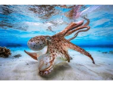 Les plus belles images du concours international de la photo sous-marine