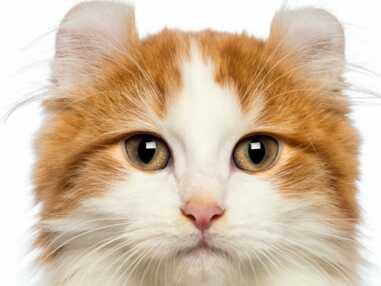 Des chats vraiment incroyables