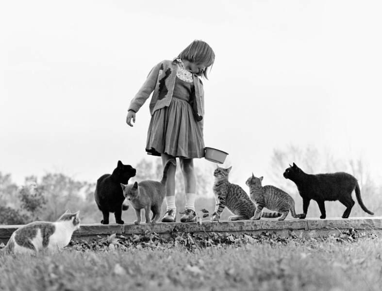 Une petite fille nourrissant des chats