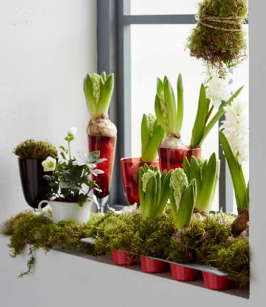 Je décore ma fenêtre avec... des jacinthes