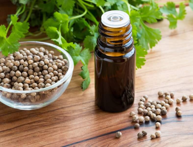 L'huile essentielle de coriandre, le must contre la fatigue