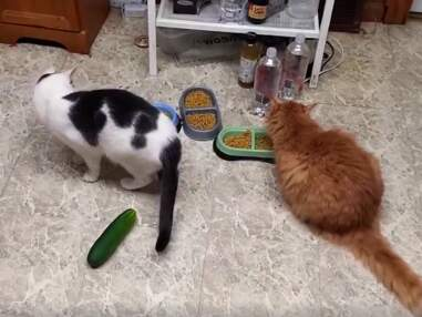 Notre best-of des vidéos d'animaux trop mignonnes vues sur Facebook