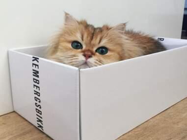 Smoothie : plus beau chat du monde?