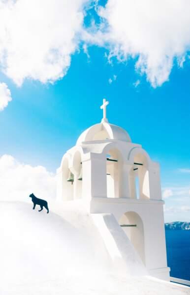 Chat en Grèce au sommet tel un dieu