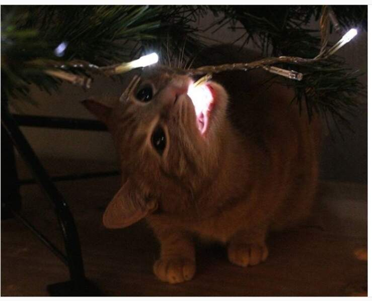 Un chat-guirlande