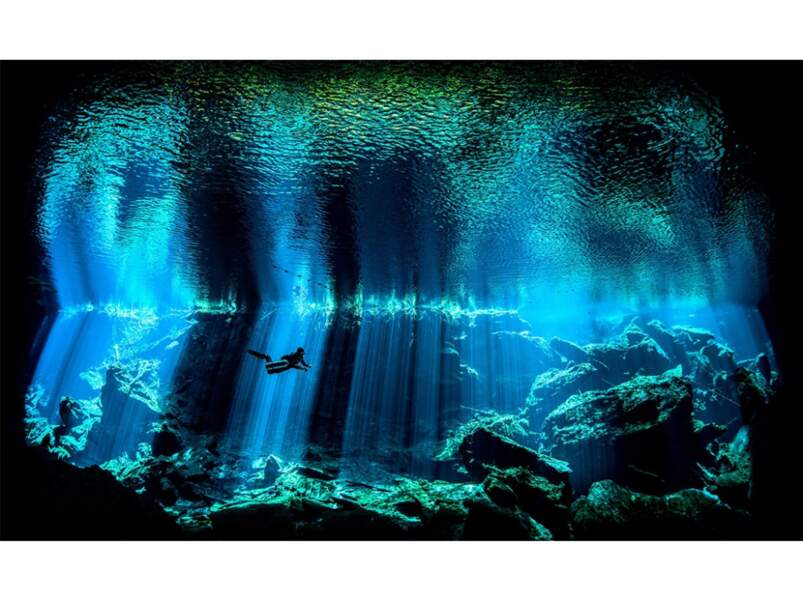 Catégorie photographe sous-marin d'origine anglaise