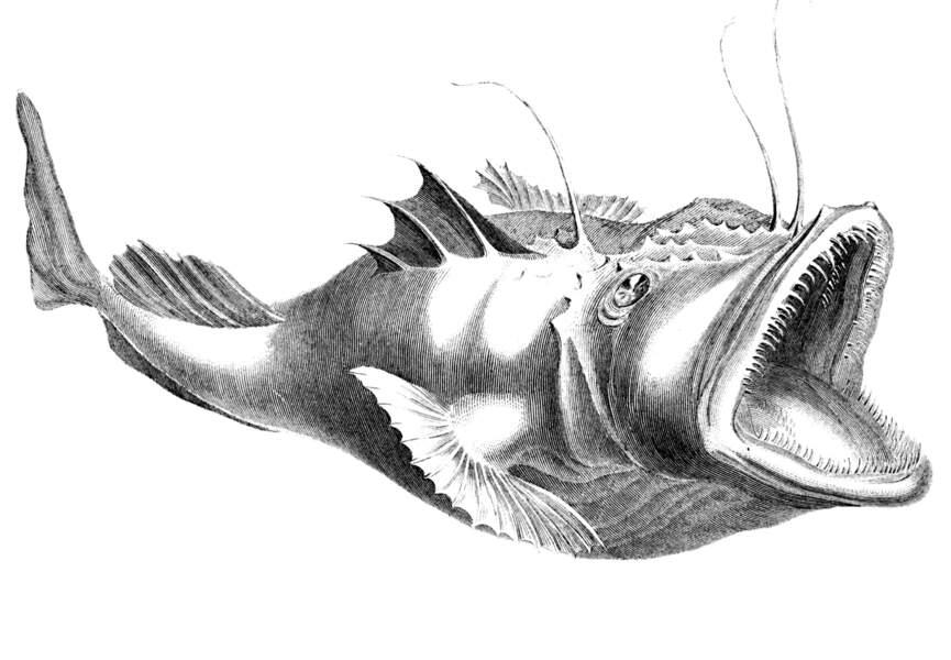 Jolie gravure d'un poisson-pêcheur