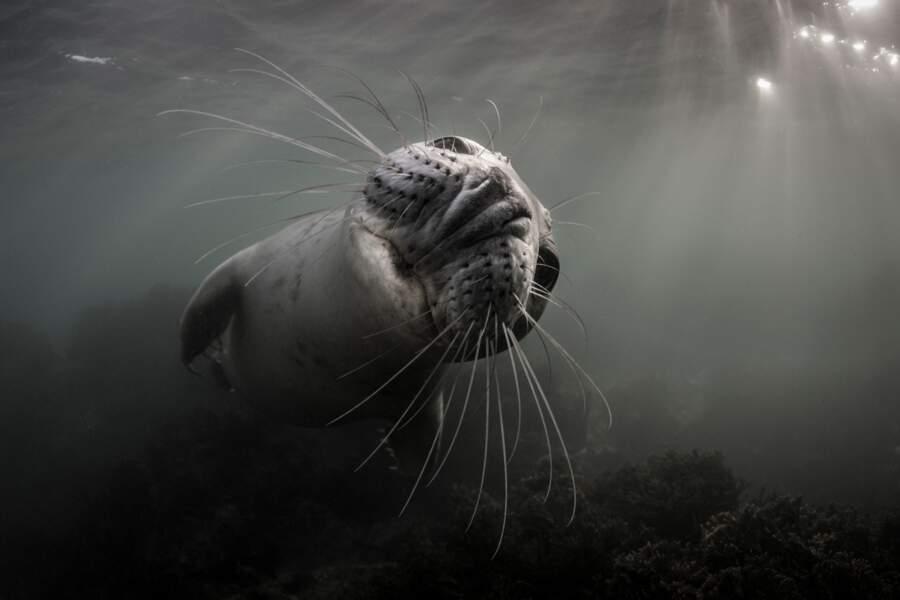 Catégorie grand angle dans les eaux anglaises