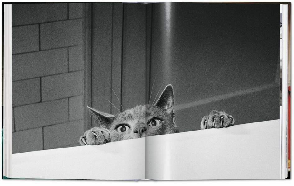 Le chat Loco