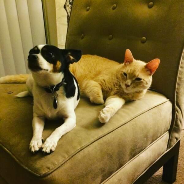 Le chien et le chat d'Evan l'attendent à la maison