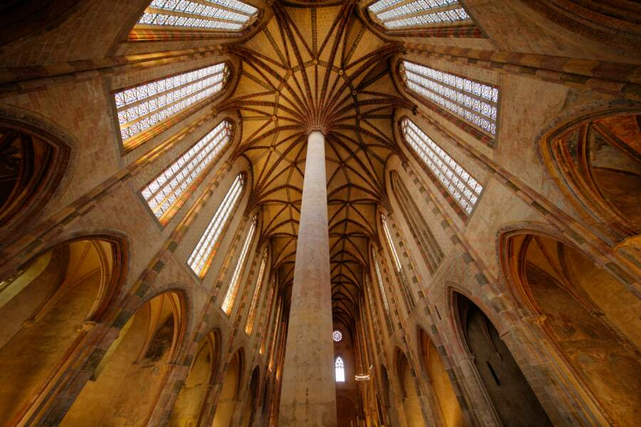 Palmier au couvent des Jacobins