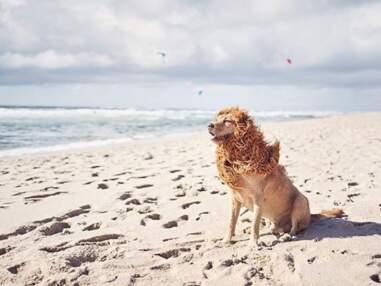 Ce lion a vraiment du chien !