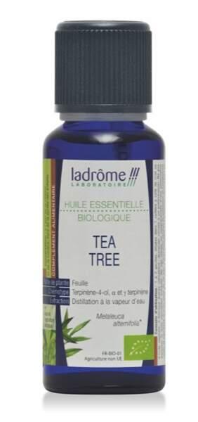 Soigner la fibre avec l'huile essentielle d'arbre à thé