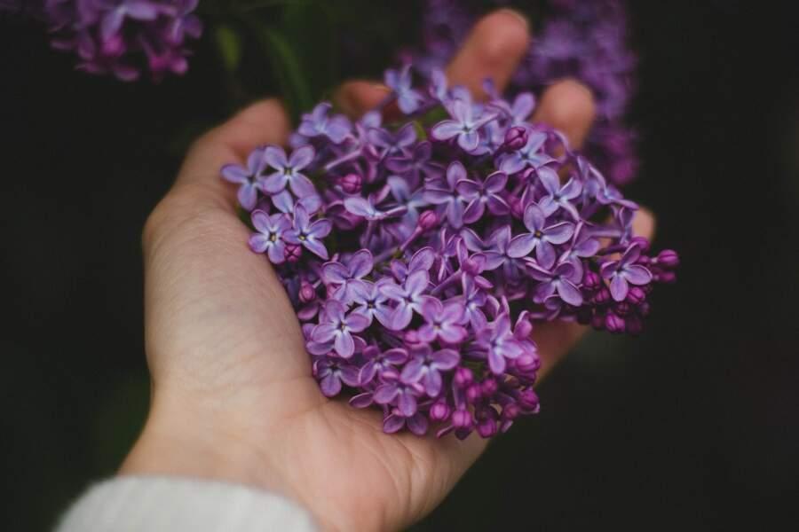 3 recommandations pour bien récolter vos fleurs