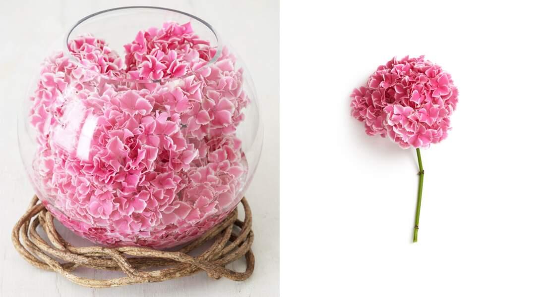 Art floral : une boule d'hortensias
