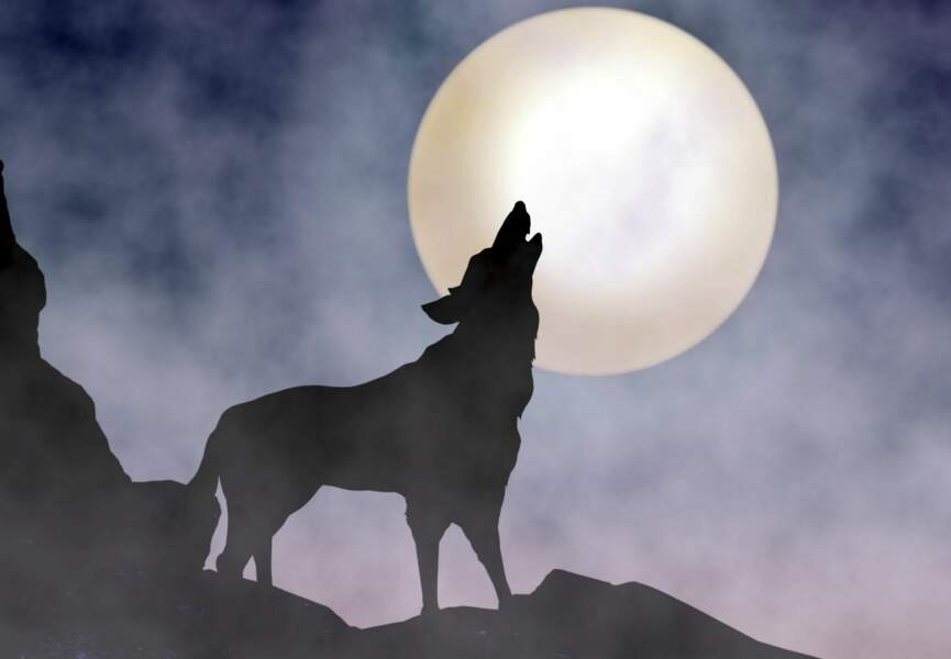 Le régime loup-garou