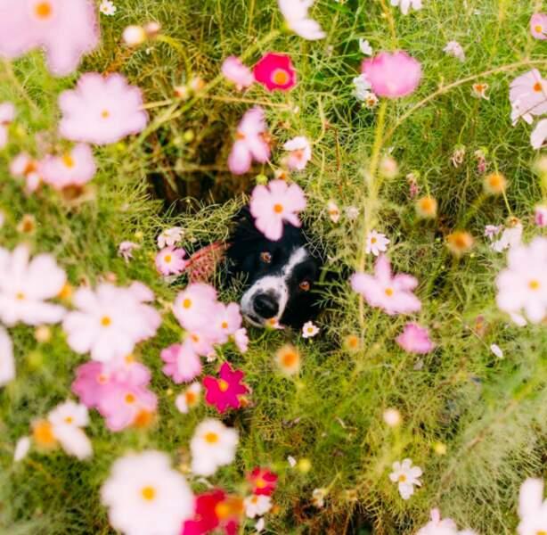 Momo aime les fleurs