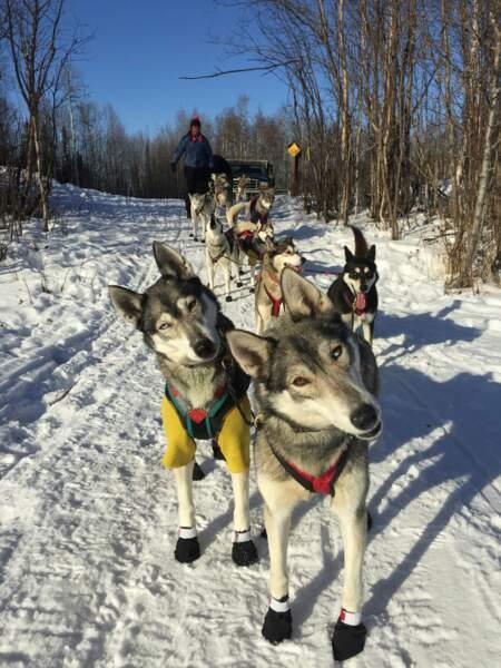 Les chiens portent des chaussons pour préserver leurs pattes du froid extrême