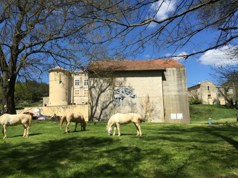 LE PLATANE COMMUN en Languedoc-Roussillon-Midi-Pyrénées