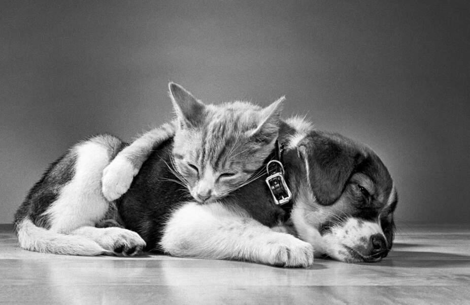 L'amitié chat et chien capturée par Walter Chandoha