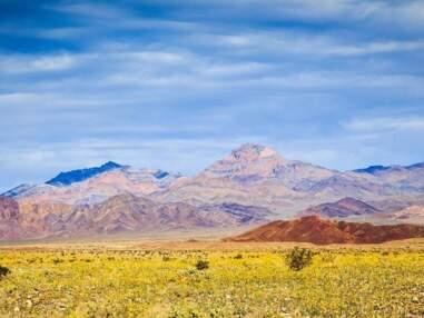 La Vallée de la mort… tout en fleurs : les plus belles images