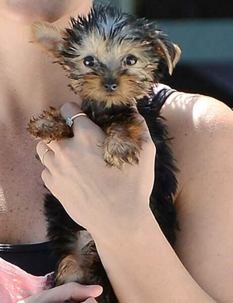 Ce mini-chien appartient à une star de la pop