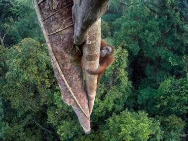 Concours Wildlife photographer of the year : les plus belles photos de la nature