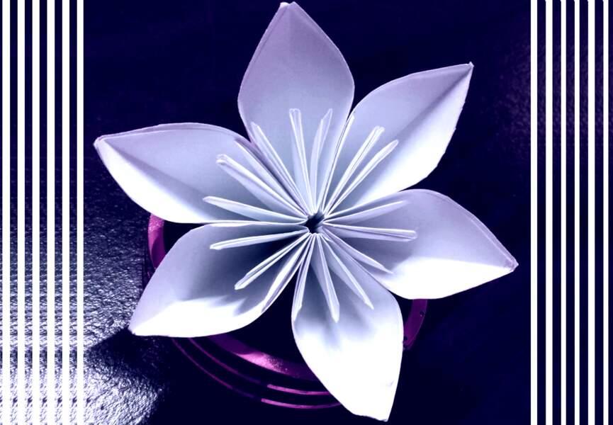 14e Prix : Une fleur de Noël