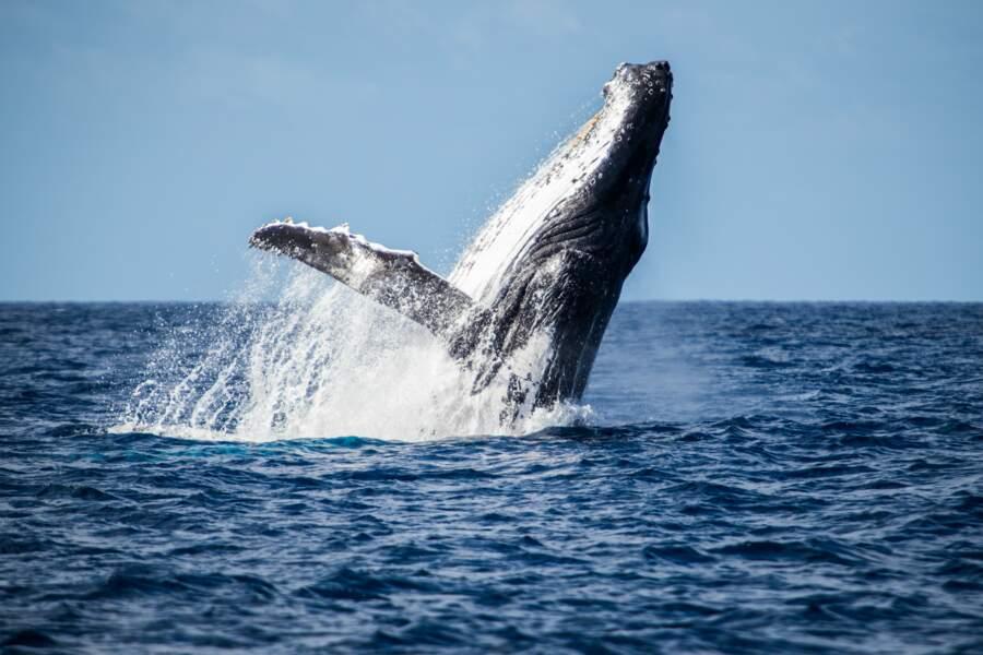 Baleine au sud de la Grande Terre