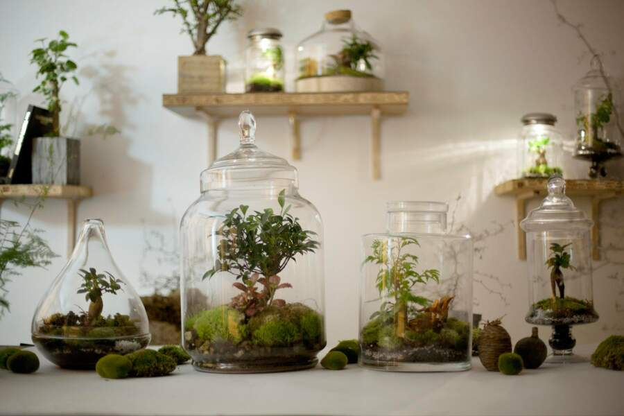 Terrarium d'exception