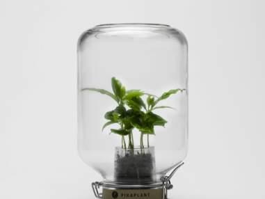 Un terrarium pour ma deco de salon